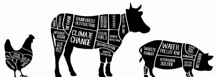 The Harmful Effects of the Meat and Dairy Industries